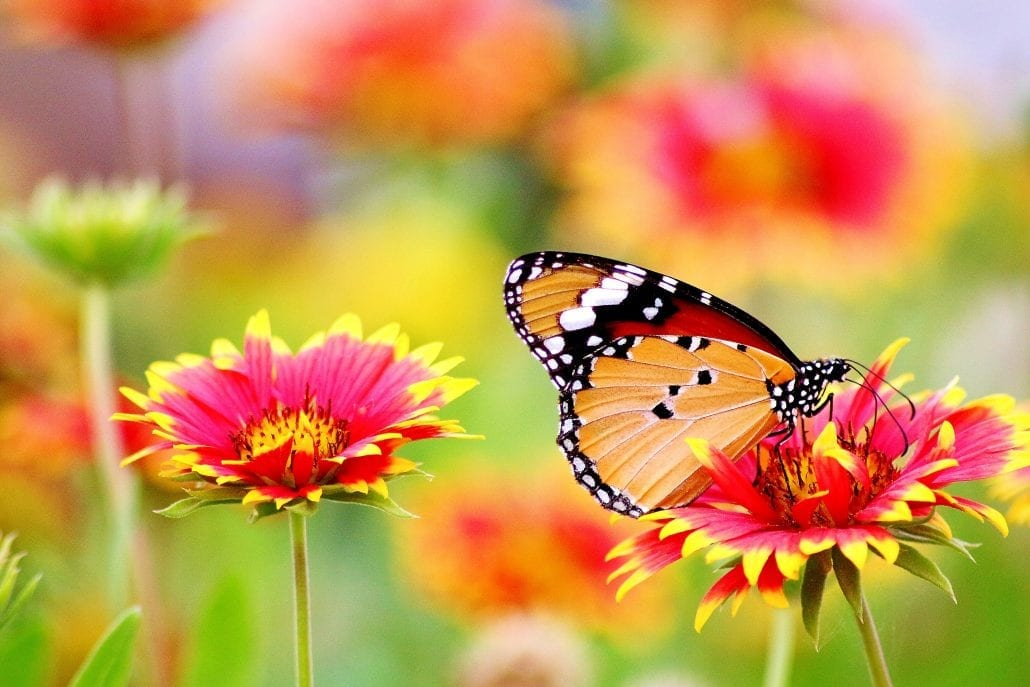 Spring butterfly on flower